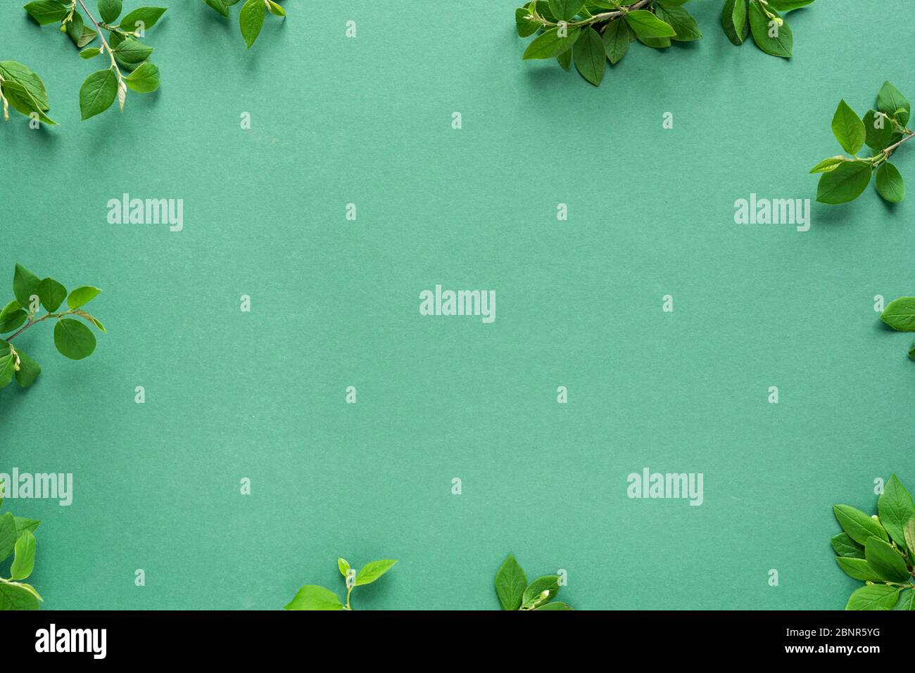 Creative layout made of green leaves, spring twigs on trendy green or mint background. Green leaves frame, flat lay, copy space. Summer or spring, eco Stock Photo