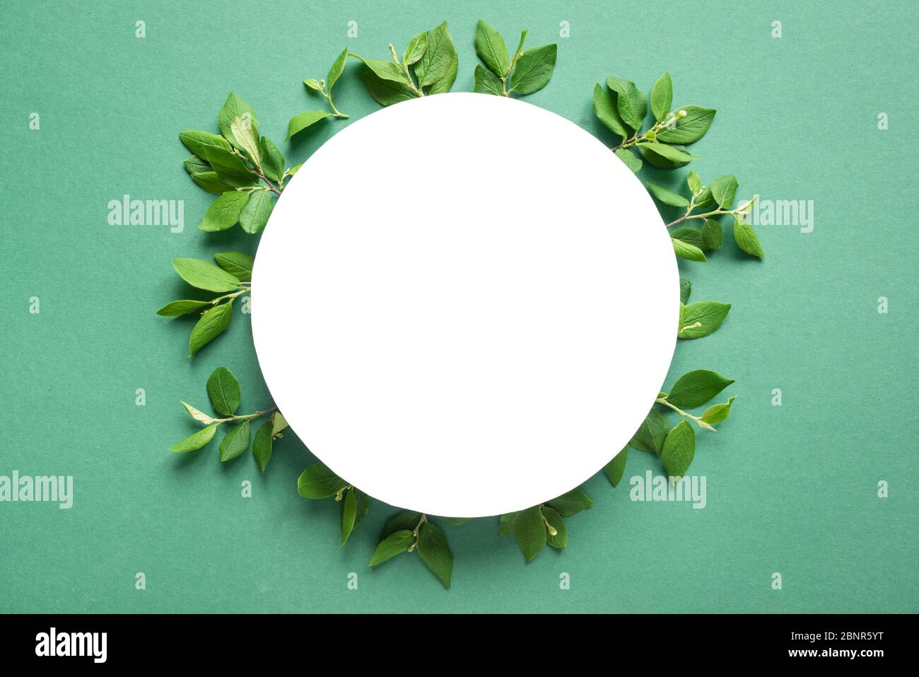 Creative layout made of green leaves, spring twigs on trendy green or mint background. Green leaves frame, flat lay, white round copy space. Summer or Stock Photo