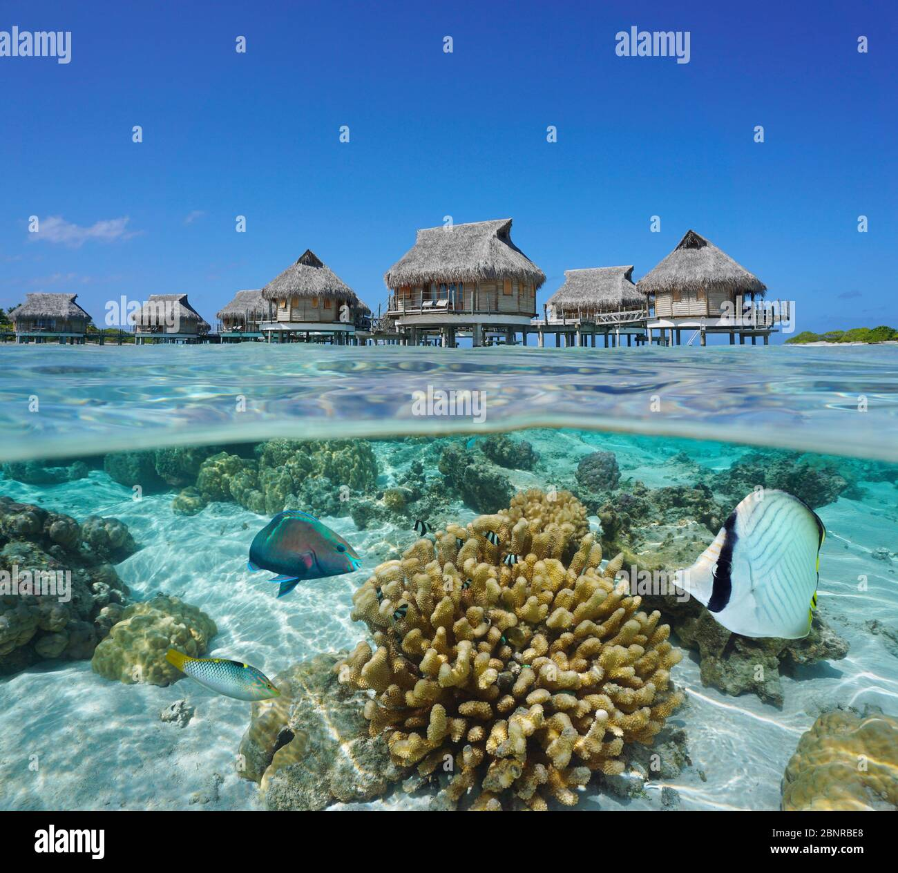 Tropical bungalows overwater and fish with coral underwater, split view over and under water surface, French Polynesia, Pacific ocean, Oceania Stock Photo