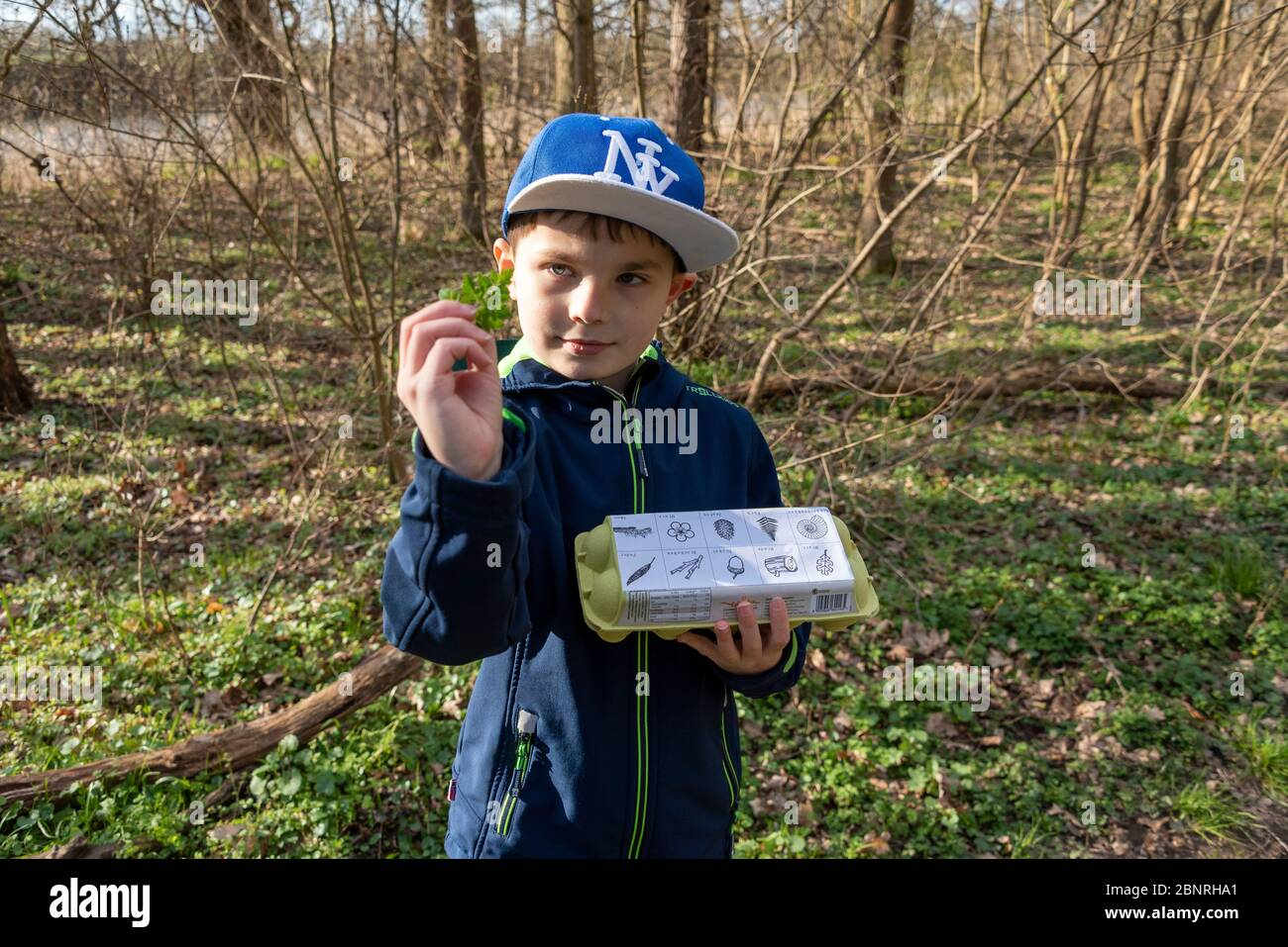 Boy holds fern and an egg box in his hand, a forest game to search for leaves, ferns, mosses, feathers and small branches. Game idea in times of Corona. Stock Photo
