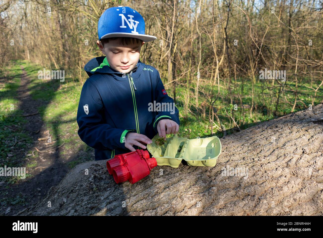Boy lays moss in an egg packaging, a forest game to find leaves, ferns, mosses, feathers and small branches. Game idea in times of Corona. Stock Photo
