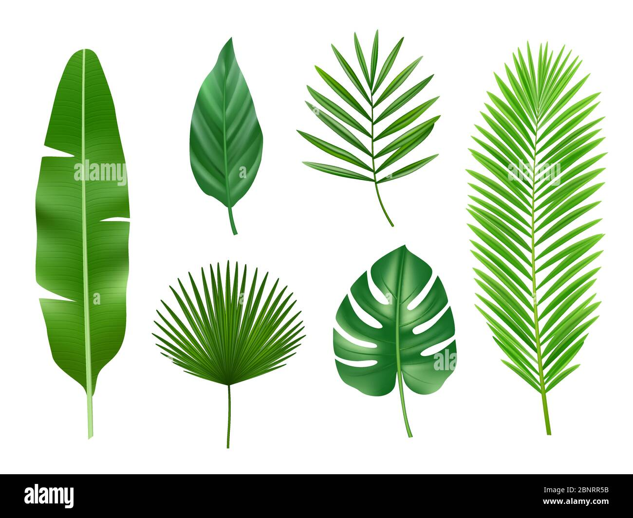 Tropical Plants Exotic Eco Nature Green Leaves Vector Realistic Collection Isolated Stock Vector Image Art Alamy Buy tropical exotic trees and get the best deals at the lowest prices on ebay! https www alamy com tropical plants exotic eco nature green leaves vector realistic collection isolated image357638215 html