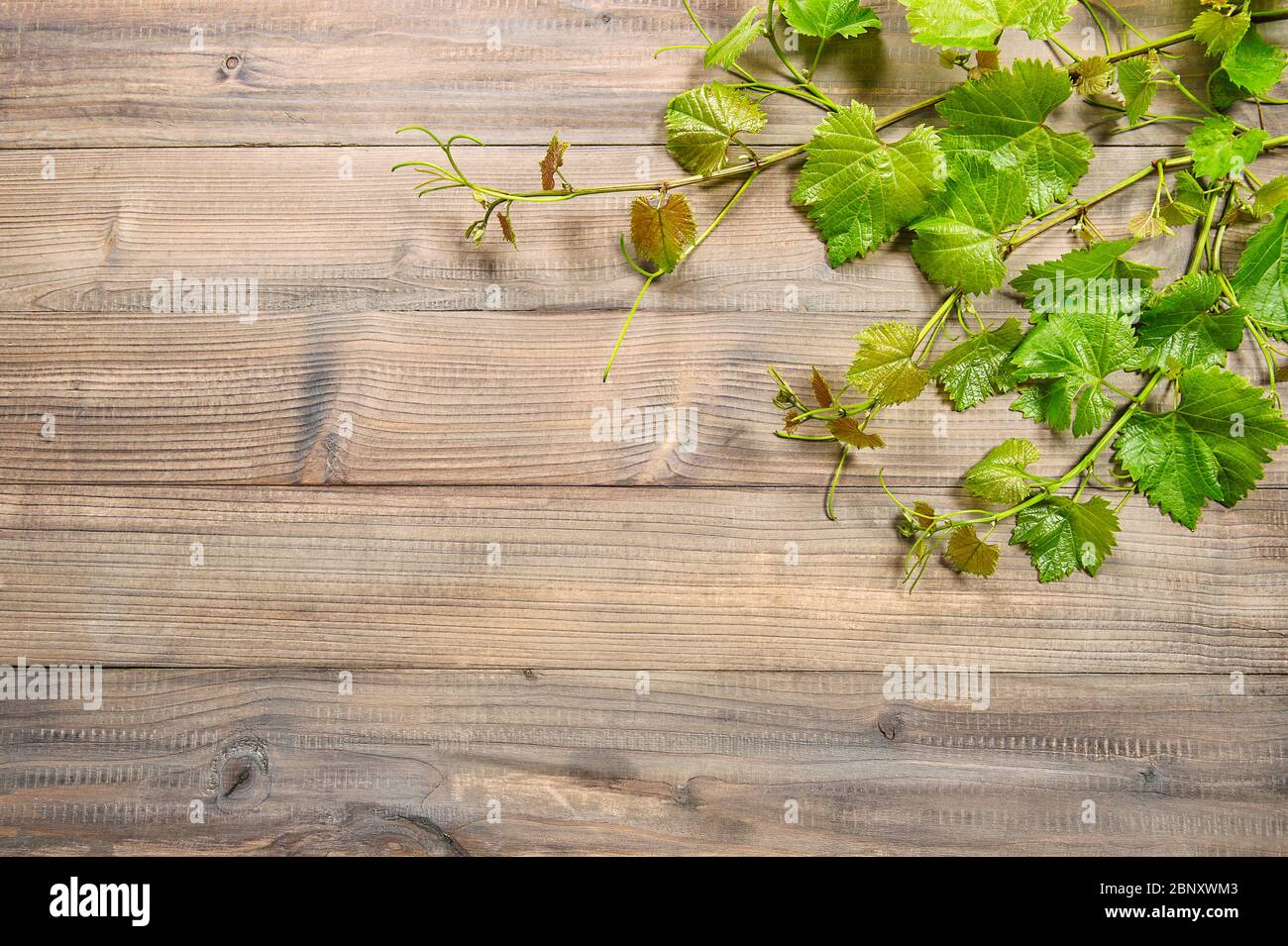 Wooden Background With Vine Leaves Border Green Grape Plant Leaf Stock Photo Alamy