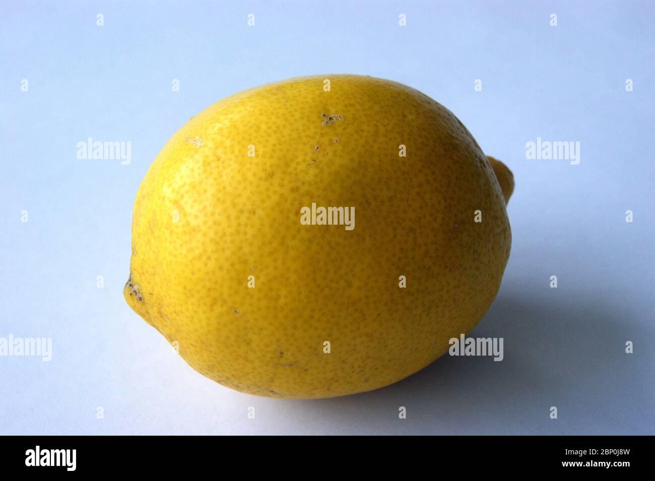 Zitrone Stock Photo