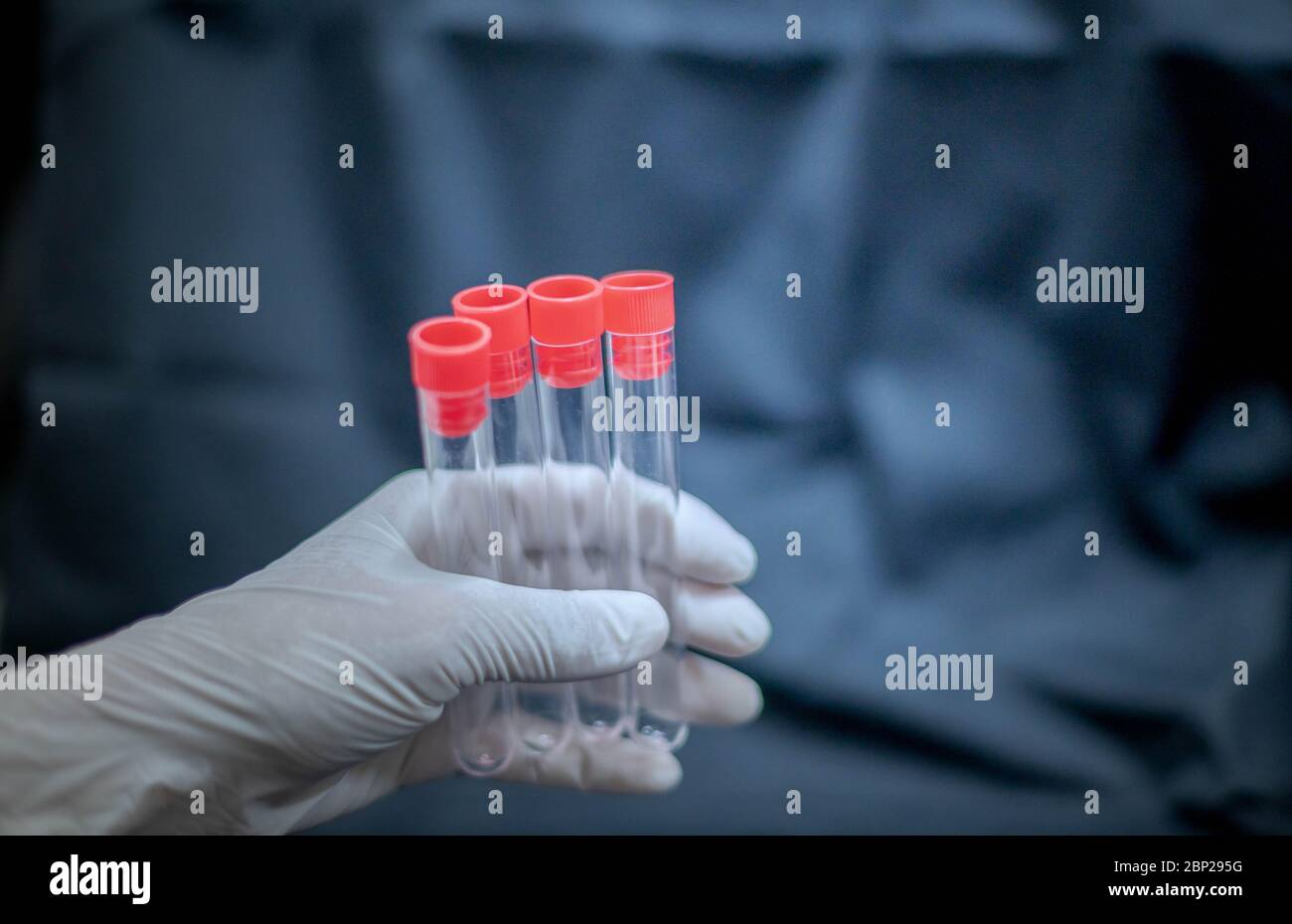 Scientist hand holding test tube and wearing surgical glove preparing to the science experiment in the laboratory room. Stock Photo