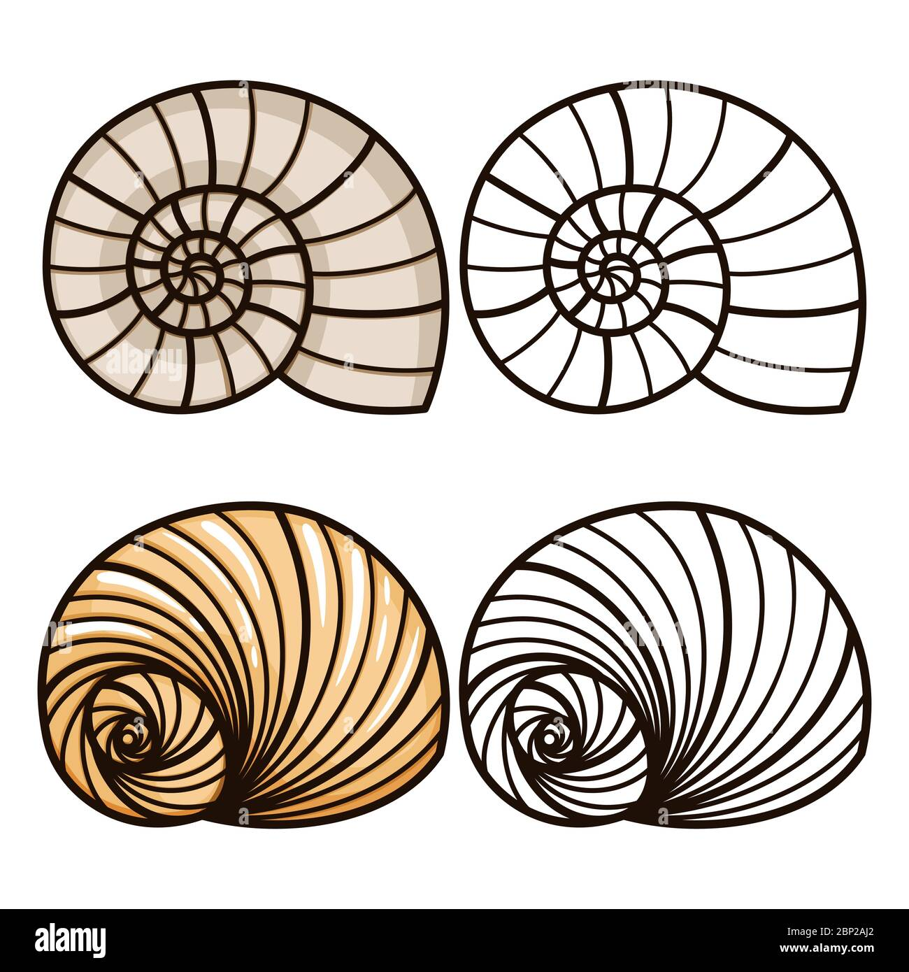 Shell #39 (Nature) – Printable coloring pages | 1390x1300