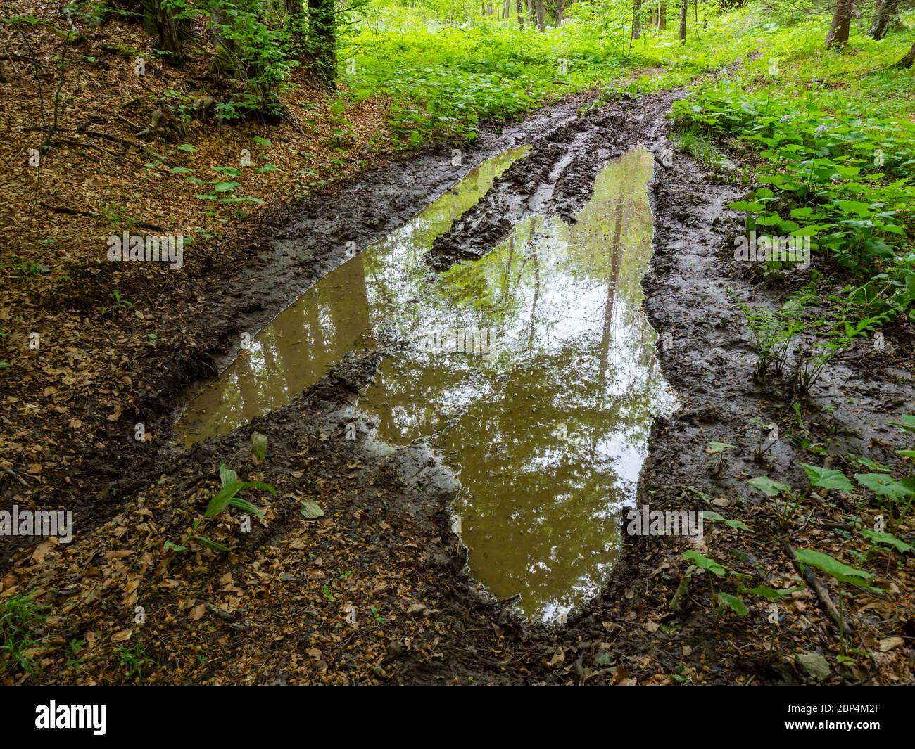 Stunning Spring Green nature color in forest water-logged waterlogged dirty road Stock Photo