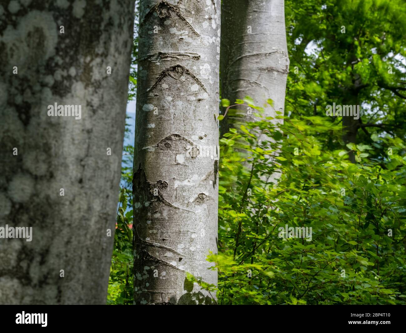 Stunning Spring Green nature color in forest tree trunk isolated in focus Stock Photo