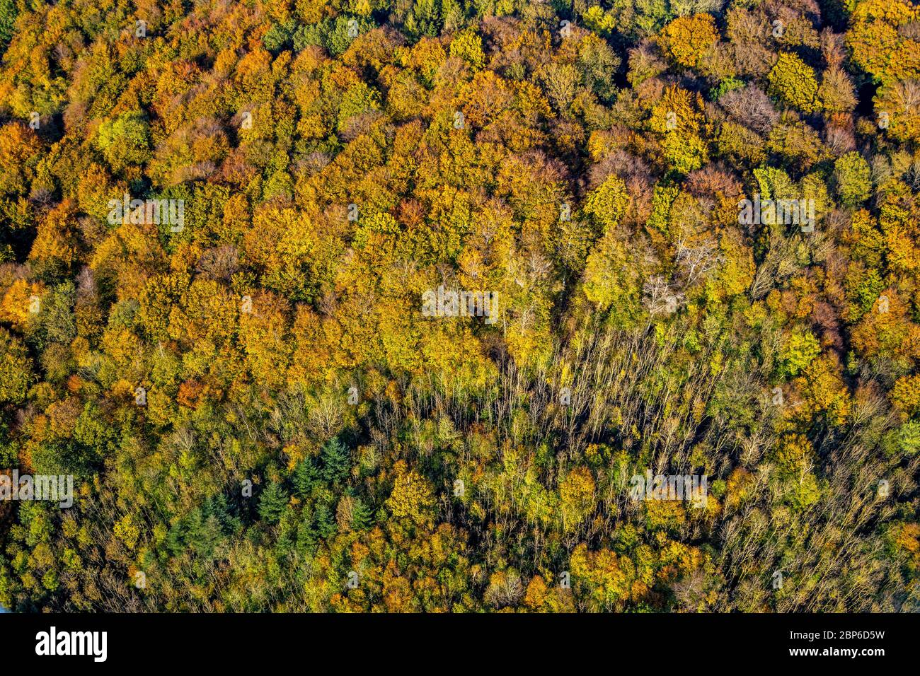 Aerial view, autumn forest in bright colors, near Habbel Quarry, Arnsberg, Sauerland, North Rhine-Westphalia, Germany Stock Photo