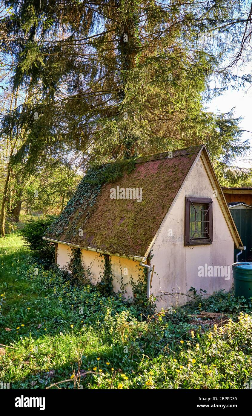 Small Cottage In The Forest Under A Big Tree Stock Photo Alamy