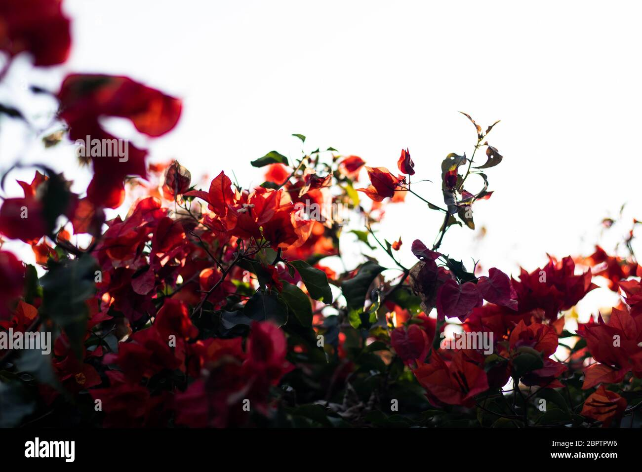 Photography Nature Background Hd High Resolution Stock Photography And Images Alamy