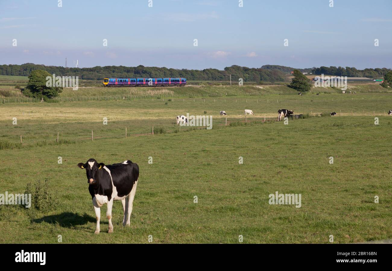 First Transpennine Express Siemens Desiro UK class 185 diesel train 185117 passing the countryside on the Fylde, Lancashire, UK Stock Photo