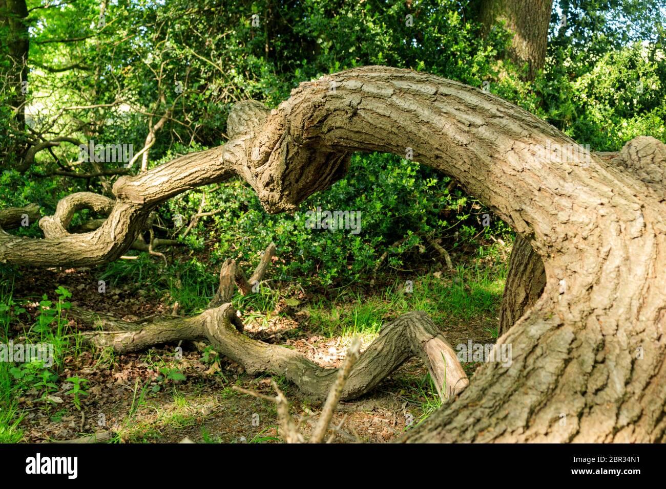 Stanworth Woods. Stock Photo