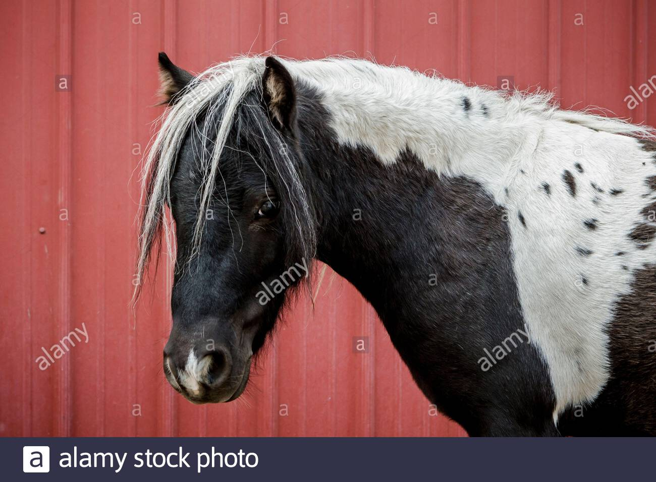 Page 2 Horse In Stable Exterior High Resolution Stock Photography And Images Alamy