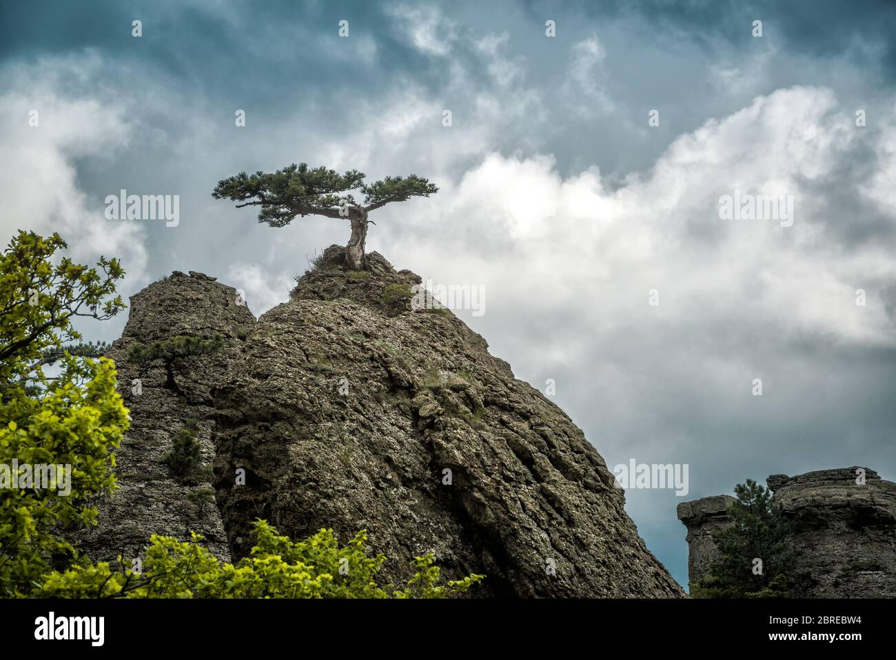 Lonely tree on a rock in the Demerdji mountain. Landscape of Crimea, Russia. Stock Photo