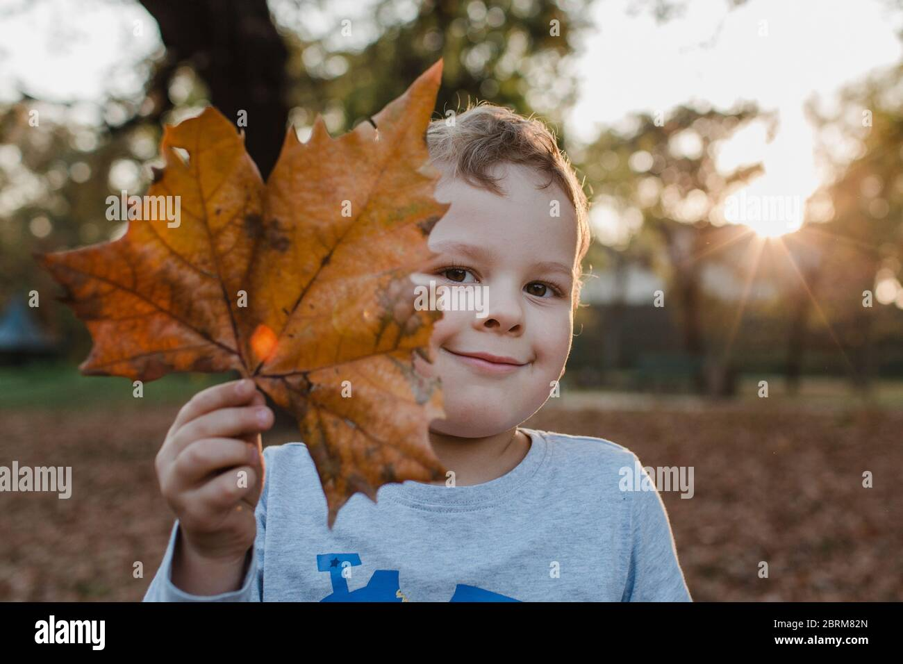 Portrait of young boy holding brown leaf. Cute child holding brown leaf in front of face and looking at camera. Stock Photo