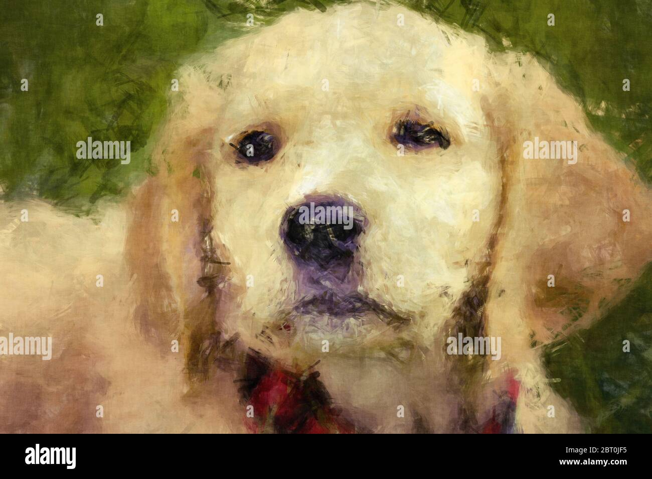 Wall Art Painterly Of A Golden Retriever Puppy Stock Photo Alamy
