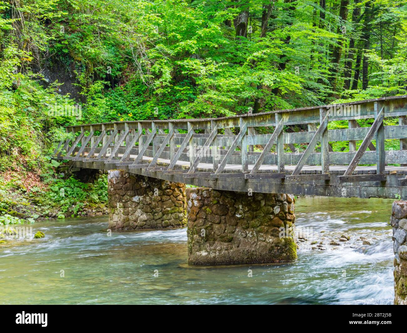 Wooden bridge stunning Spring Green nature color in forest near source of river Kupa in Croatia Europe Stock Photo