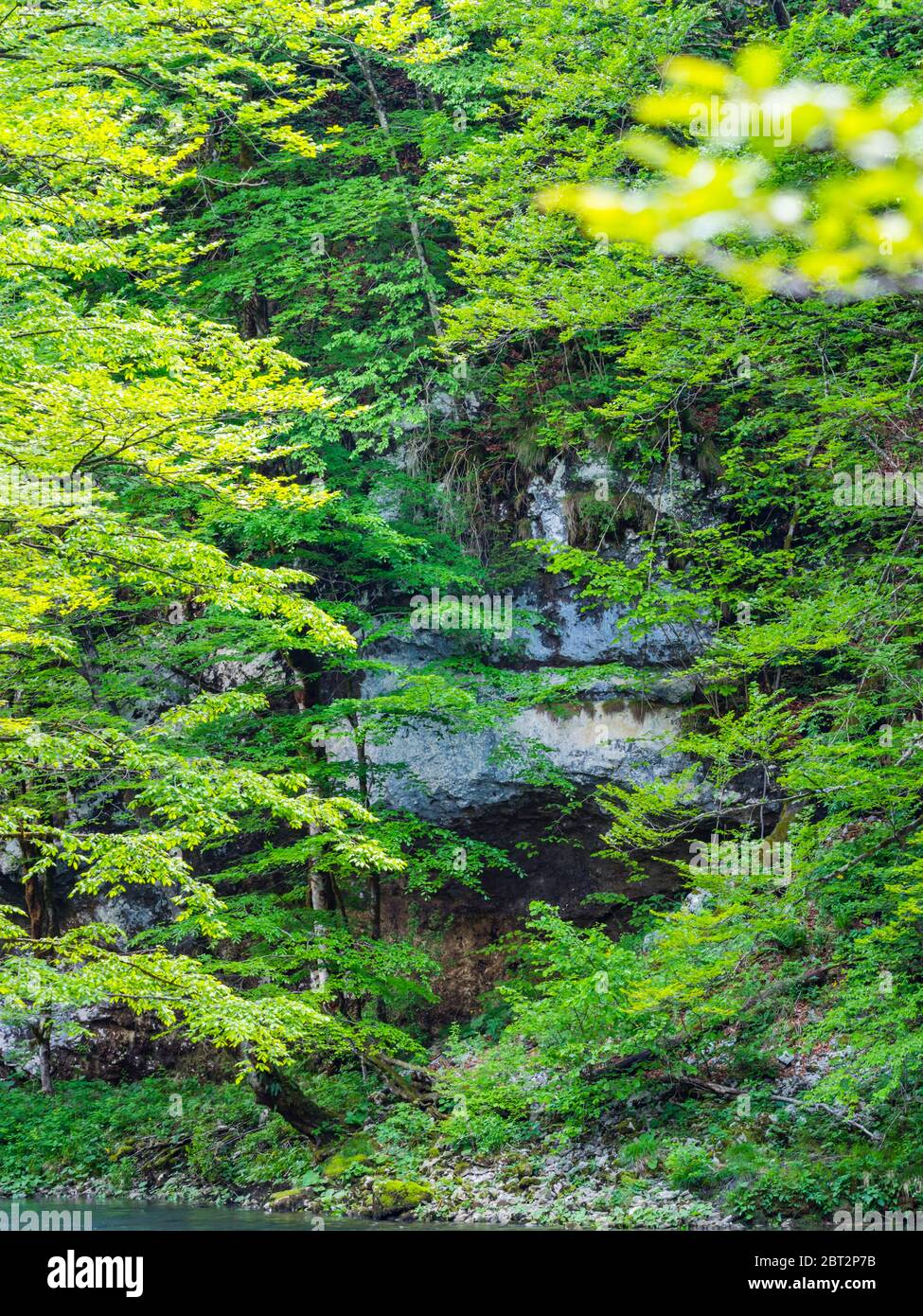 Stunning Spring Green nature color in forest near source of river Kupa in Croatia Europe rocky rock Stock Photo
