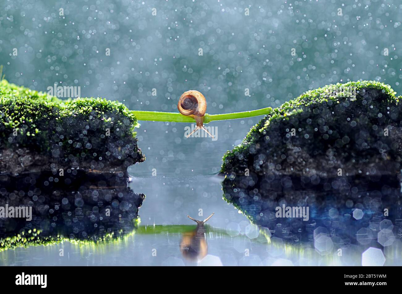Close-up of a snail crossing two rocks on a plant stem, Indonesia Stock Photo