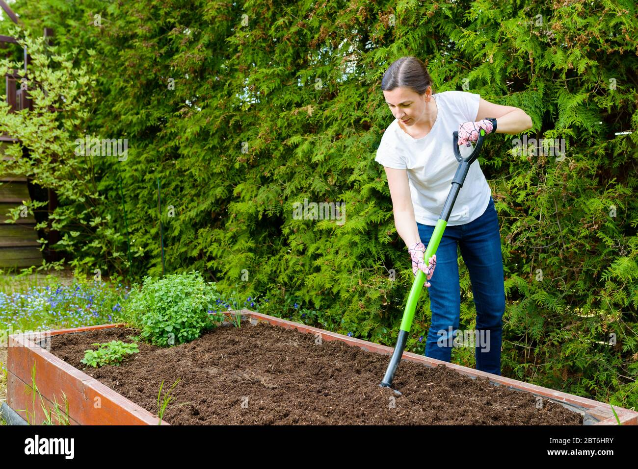 Woman loosening the soil with a pitchfork for growing vegetables and herbs in a wooden crate - a vegetable garden Stock Photo