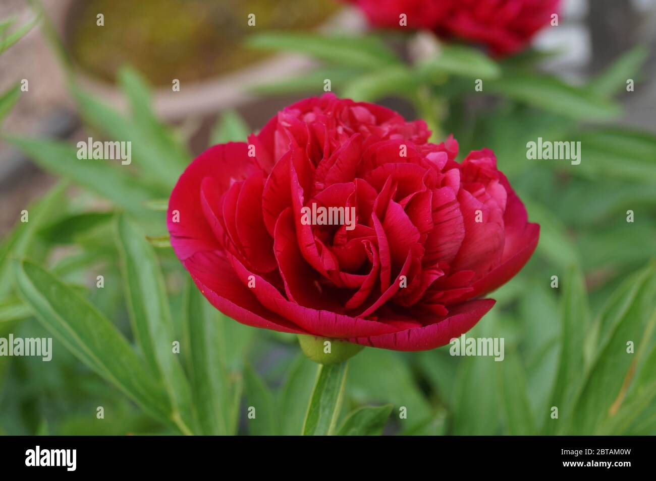 Blüte Stock Photo