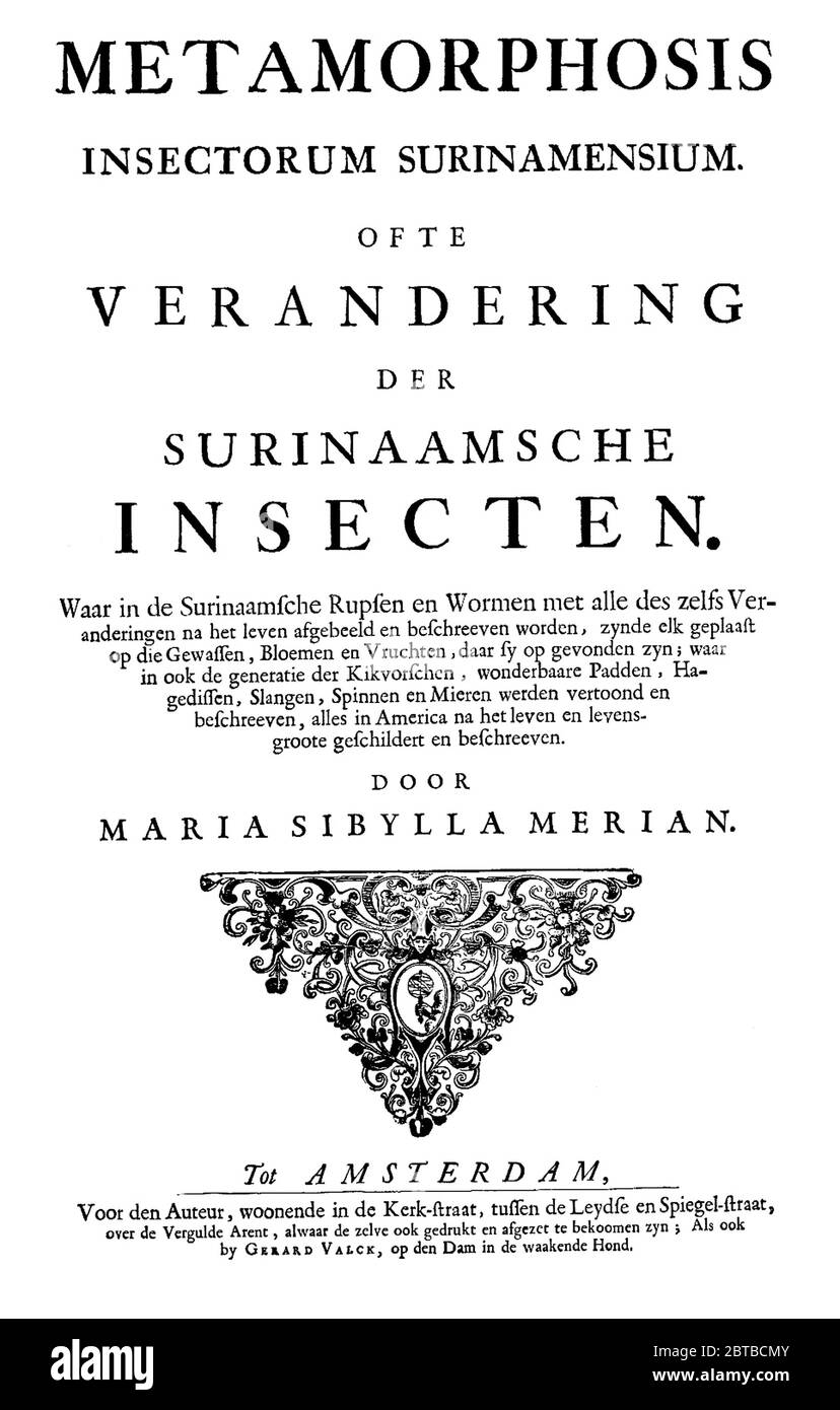 1705,  GERMANY : The german naturalist woman painter , scientific illustrator and biologist MARIA SIBYLLA MERIAN ( 1647 - 1717 ). Sibylla's father was the Swiss engraver and pubblisher Matthäus Merian ( Matthew , 1593 - 1650 ) the Elder . Frontespice of Sibylla major work METAMORPHOSIS INSECTORUM SURINAMENSIUS , printed in Amsterdam, 1705 . - SYBILLA - HISTORY - foto storica storiche - portrait - ritratto - NATURALISTA - NATURALIST - SCIENZA - SCIENCE - BIOLOGY - BIOLOGIA - illustratrice - illustratore - illustrator - woman painter - pittrice - pittura - painting - ARTE - ARTS - ART - illustra Stock Photo