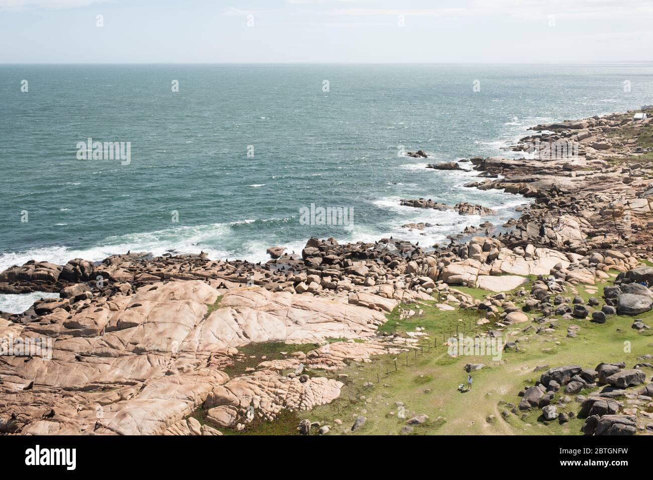 Aerial view of the coast of Cabo Polonio. South American fur seals, Arctocephalus australis, and South American sea lions, Otaria flavescens, on a roc Stock Photo