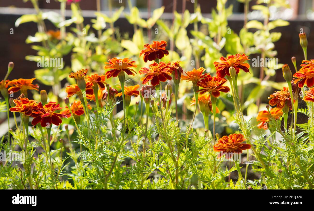 Flowers Burst High Resolution Stock Photography and Images   Alamy