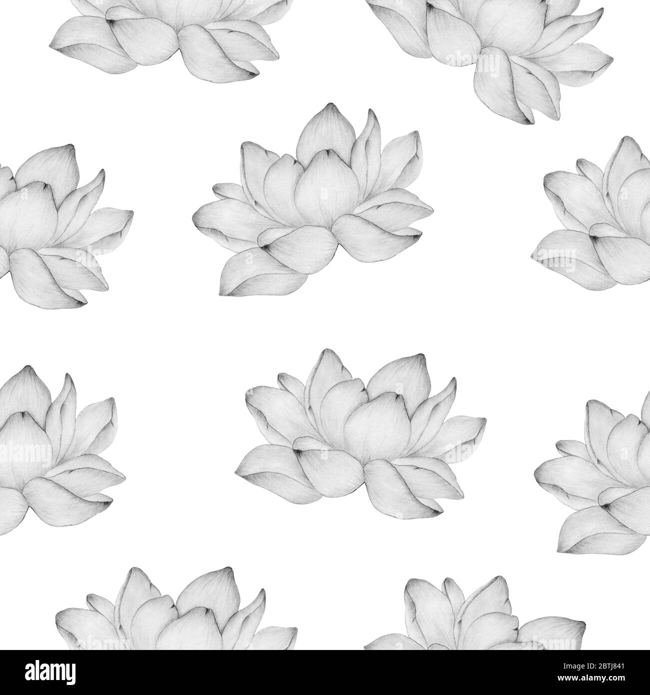 Seamless Floral Background With Lotus Flower In Pencil Drawing Simple And Elegant Floral Pattern For Fabric Wrapping Projects Or Backgrounds Stock Photo Alamy