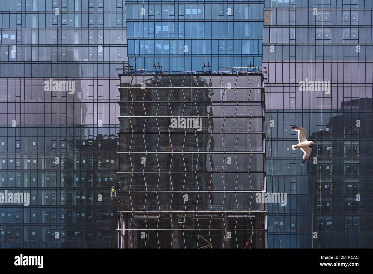 colorful reflections on blue glass building  with seagull Stock Photo