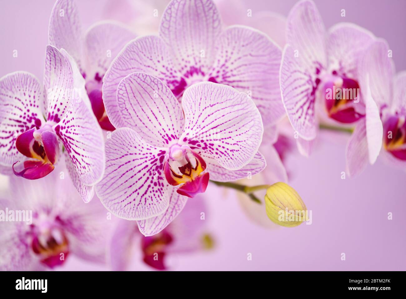 """TROPICAL FLOWERS ORCHIDS Wallpaper Border  6 7//8/"""""""