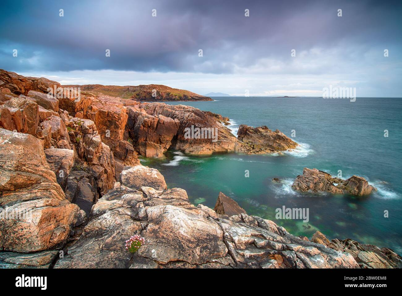 A small clump of sea Thrift clings precariously to the edge of rugged cliifs at Hushinish on the Isle of Harris in the Outer Hebrides of Scotland Stock Photo