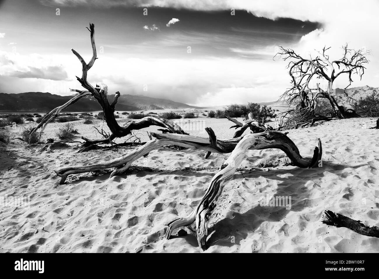 Mesquite Tree at Mesquite Flats Sand Dunes, Stovepipe Wells, Death Valley National Park, California, USA Stock Photo