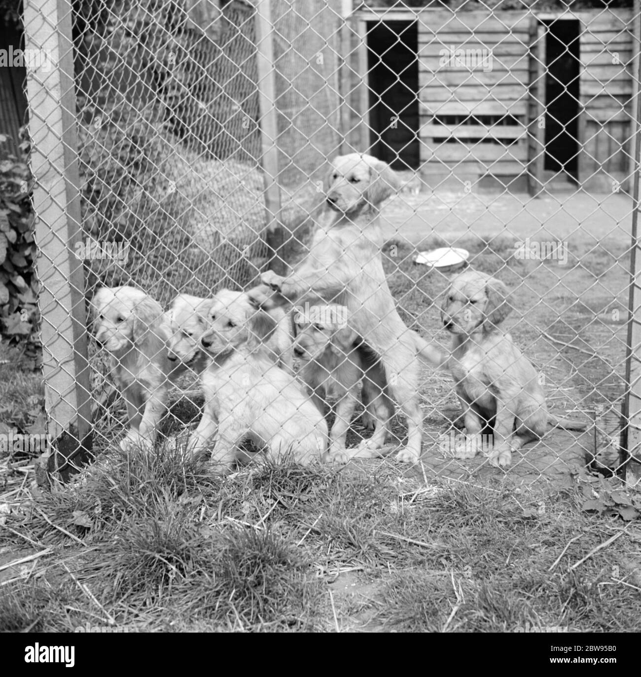 Kennels Black And White Stock Photos Images Alamy