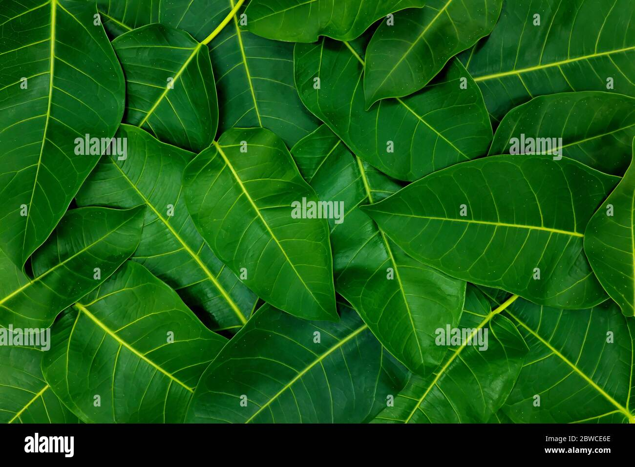 Dark Saturated Green Leaves Wallpaper Background For A Natural