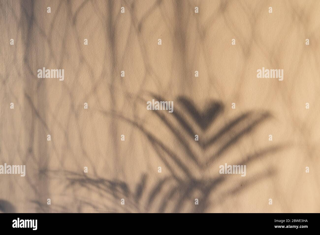 Palm Tree And Curtain Shadow On The Door Shot With Natural Window Light At Golden Hour Stock Photo Alamy