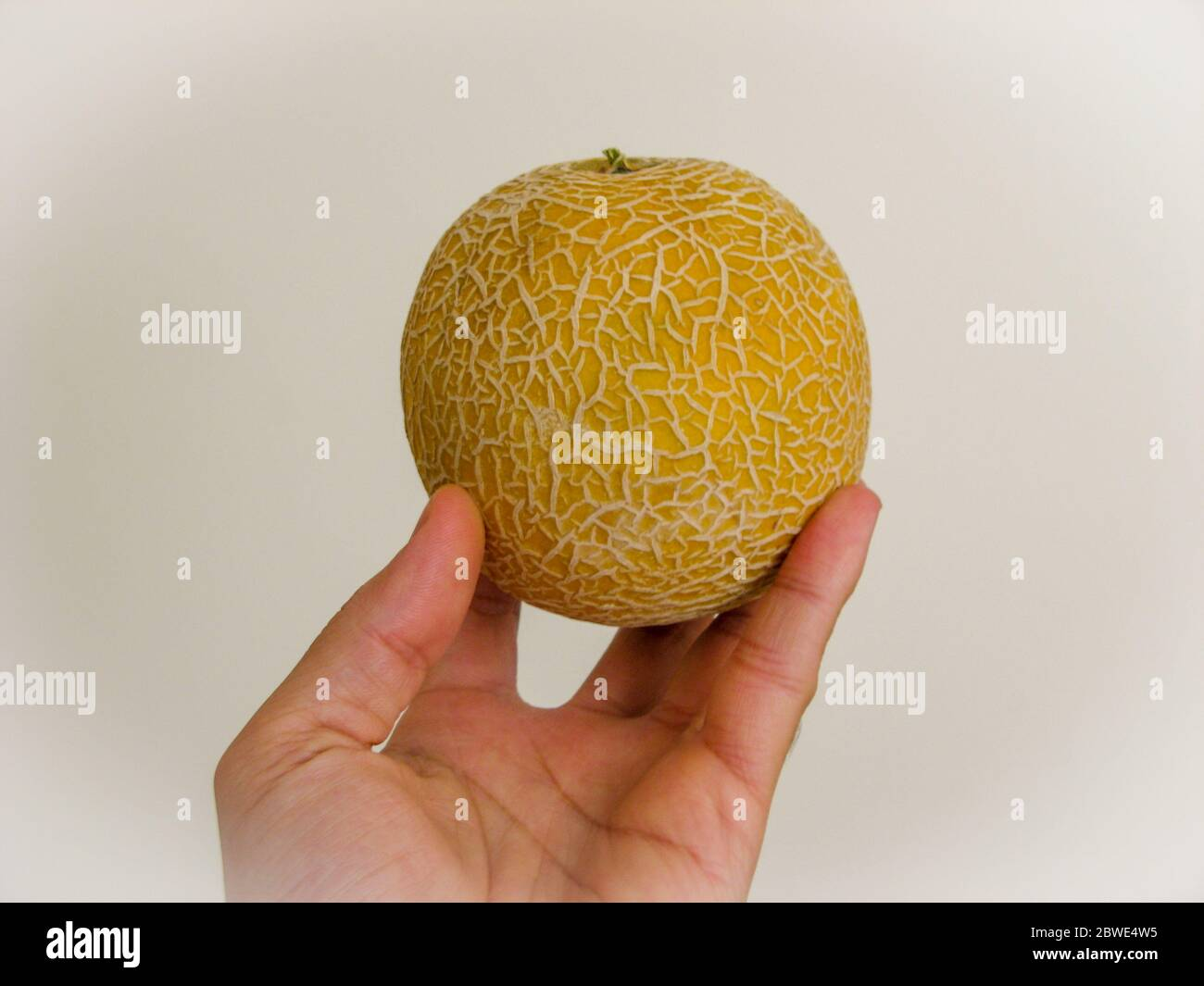Close Up Of Fresh Cantaloupe Melon On Hand With Withe Background Yellow Melon In Spring Organic And Sweet Melon The Family Cucurbitaceae Stock Photo Alamy It is sort of crunchy and does not have the best flavor. alamy