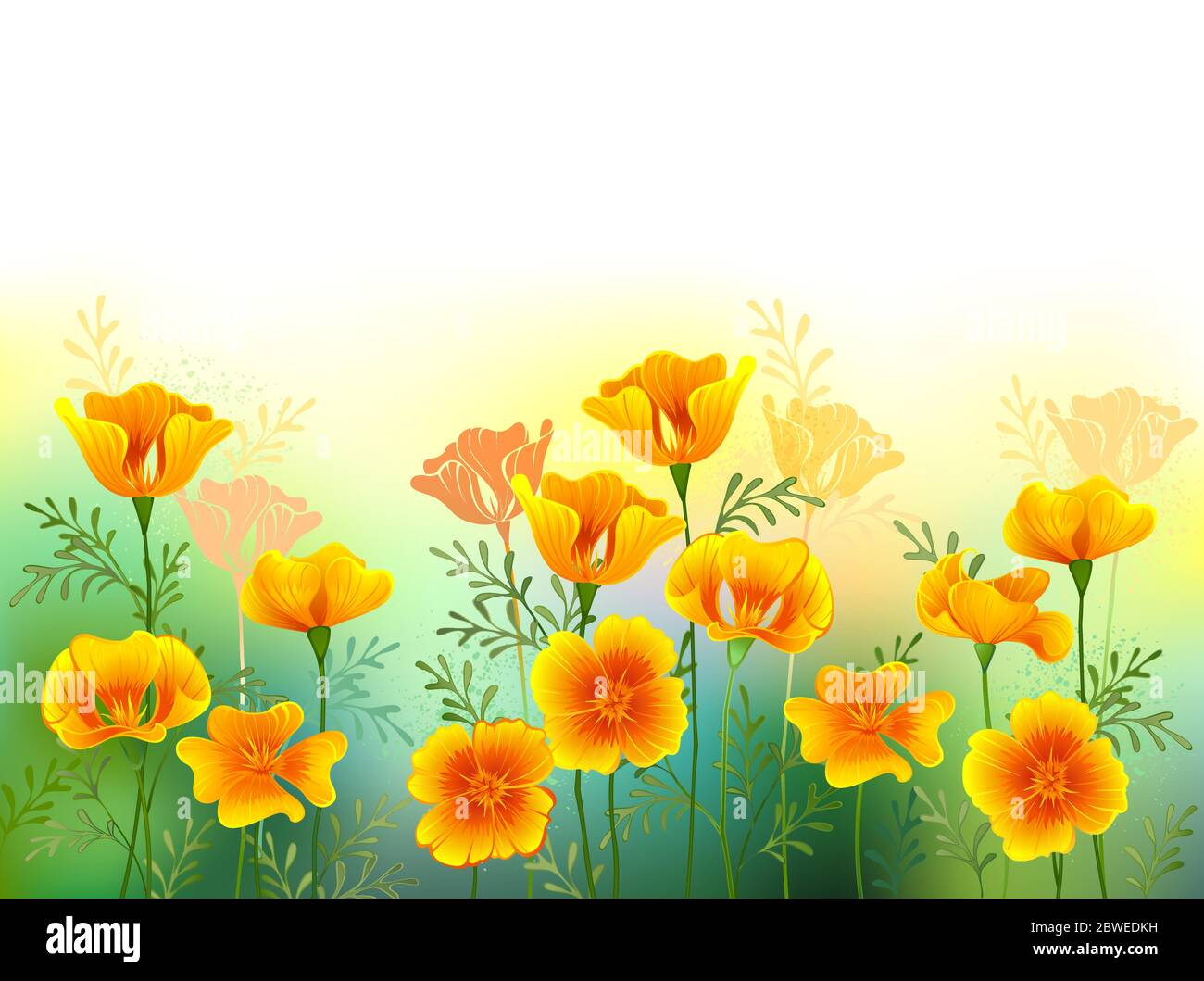 Artistically drawn glade of orange, California poppies on white background. Wildflowers. Stock Vector