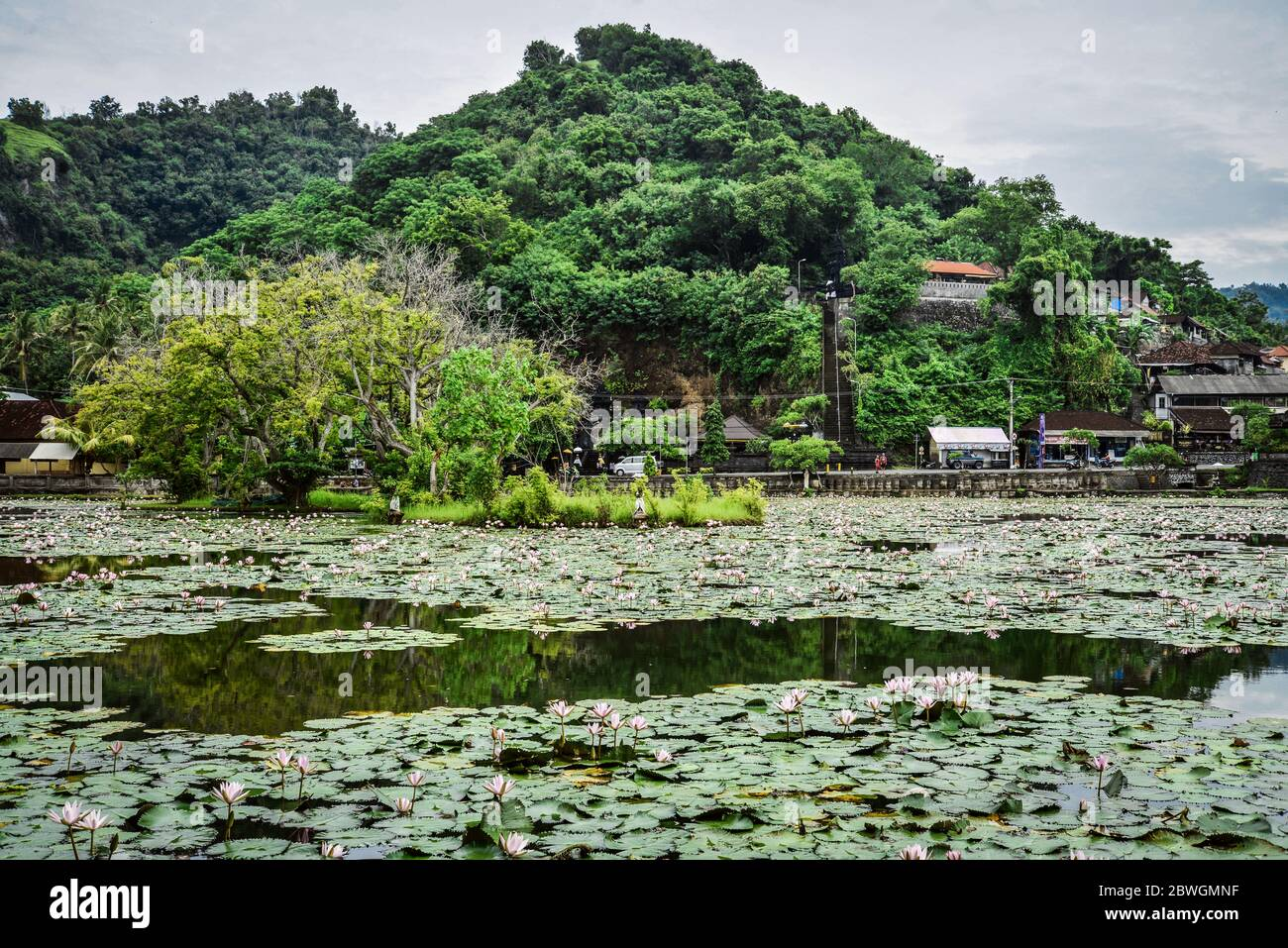 Lotus Lagoon High Resolution Stock Photography And Images Alamy