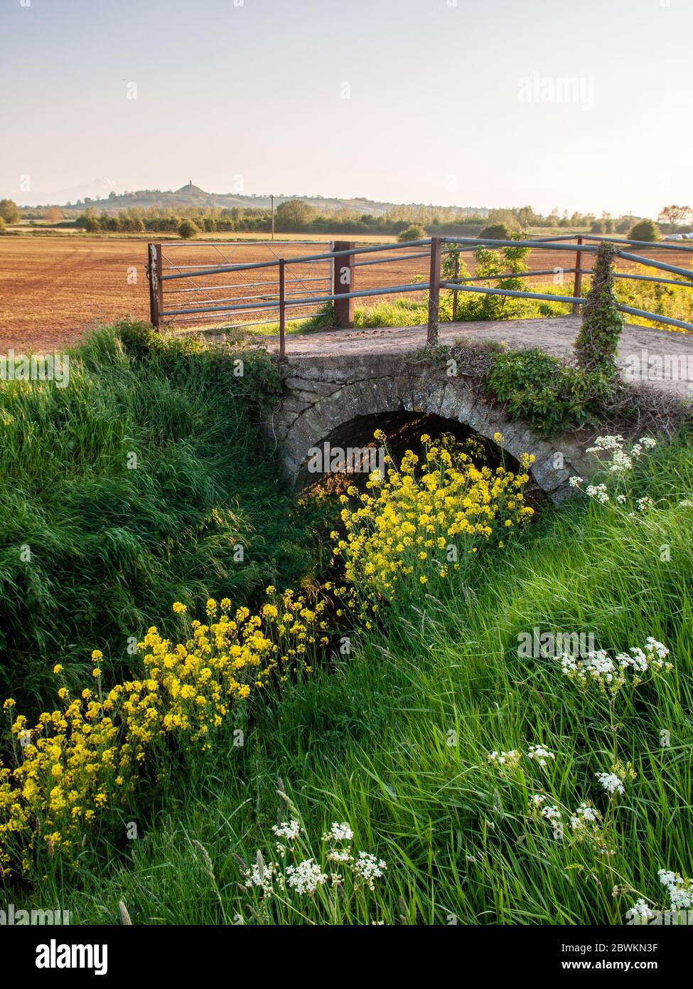 A small bridge surrounded by wildflowers crosses a drainage ditch to farmland fields in the Somerset Levels, with Glastonbury Tor in the distance. Stock Photo