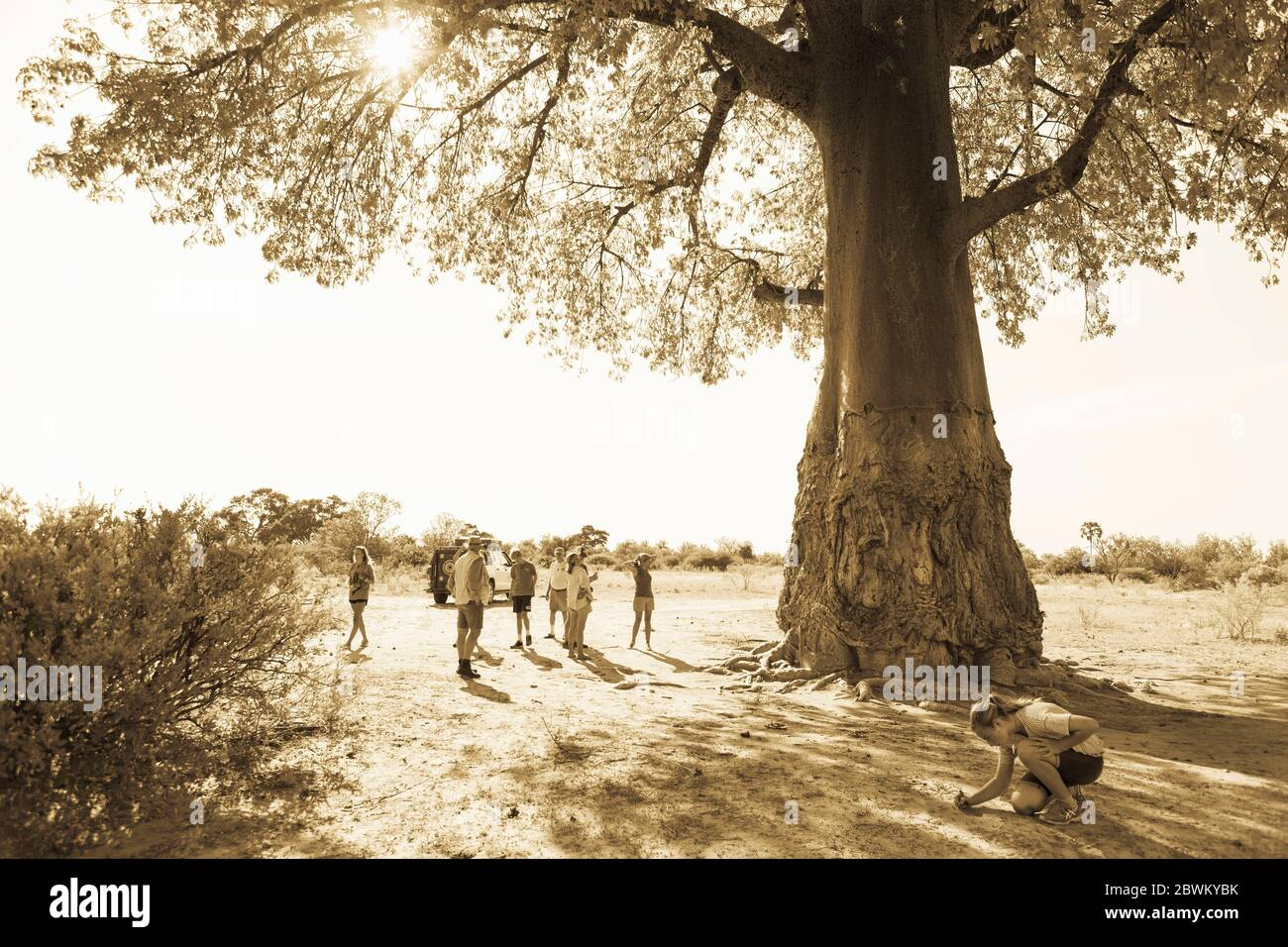 Group of people, tourista and guide under a spreading baobab tree, Adansonia. Stock Photo