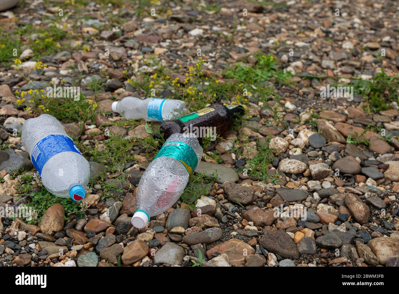 plastic bottles, trash thrown on grass. Garbage dump in forest. Plastic and food waste concept. Stock Photo
