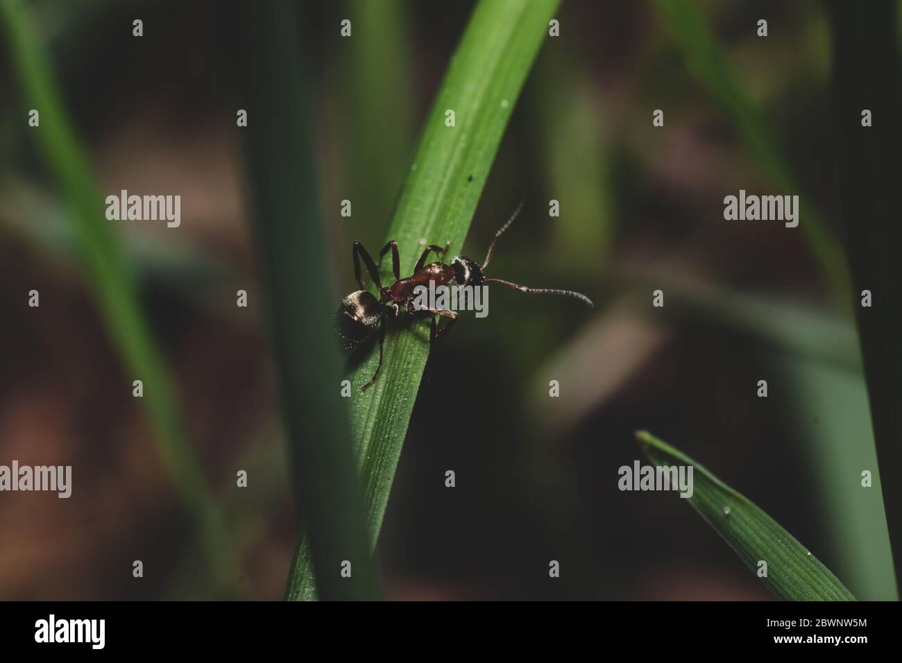 Close up view with ant that crawling on grass Stock Photo
