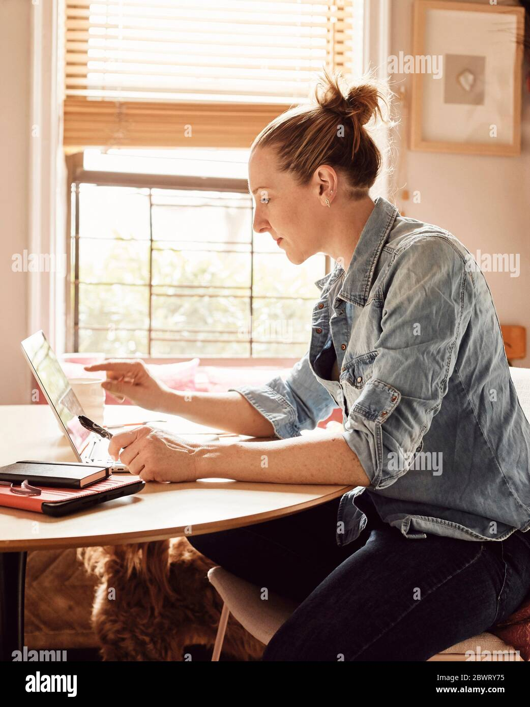 A woman working from home in her sunny kitchen, concentrating on her computer. Stock Photo