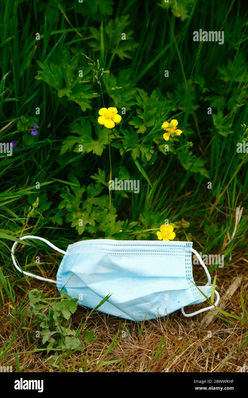 2nd June 2020, near Tonbridge, Kent, UK: Discarded face mask in wildflowers next to hedgerow alongside a country lane, likely thrown from a passing vehicle or cyclist. The yellow flowers are creeping buttercup (Ranunculus repens) Stock Photo