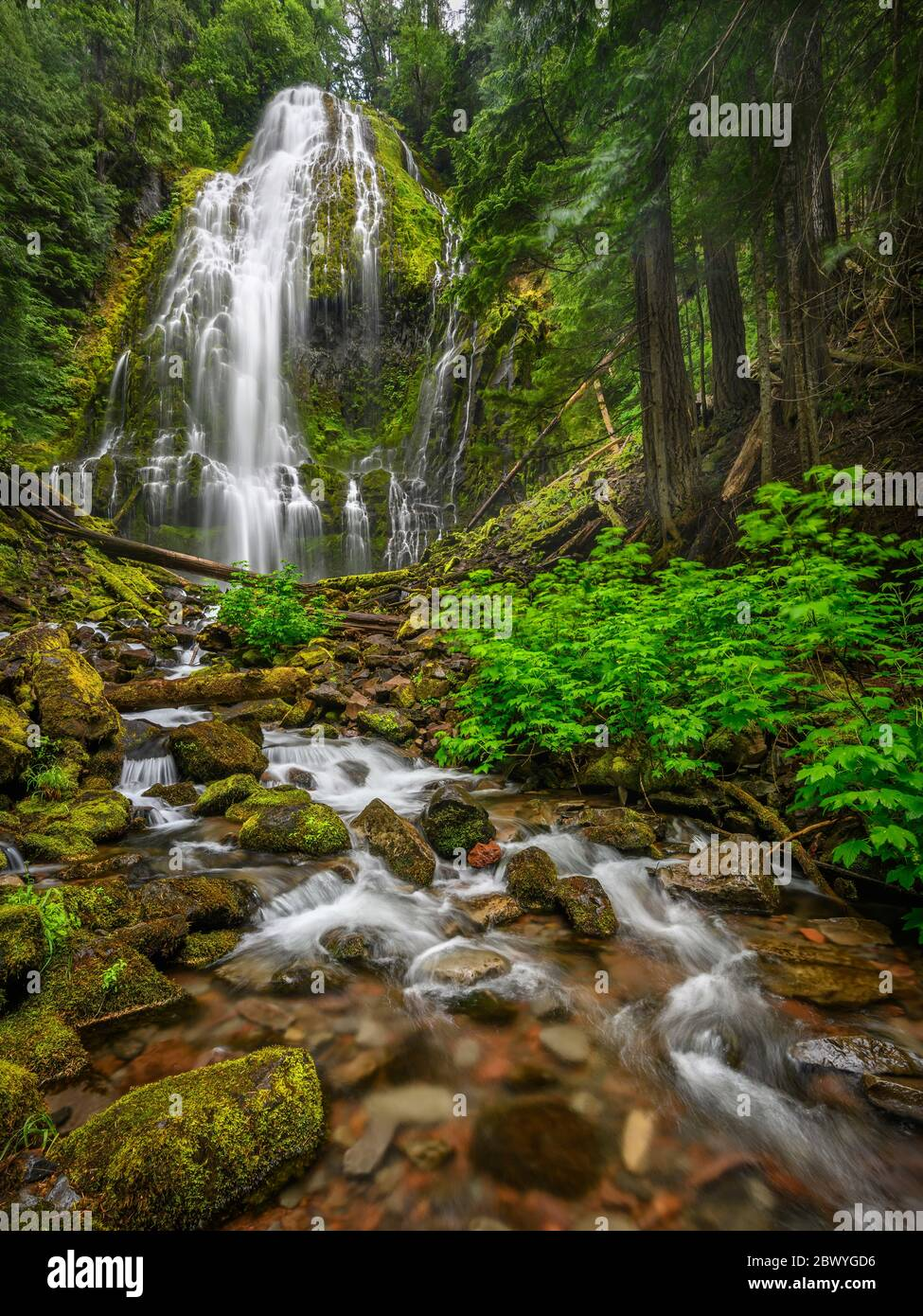 Lower Proxy Falls; Proxy Falls Trail, Three Sisters Wilderness, Willamette National Forest, Cascade Mountains, Oregon. Stock Photo