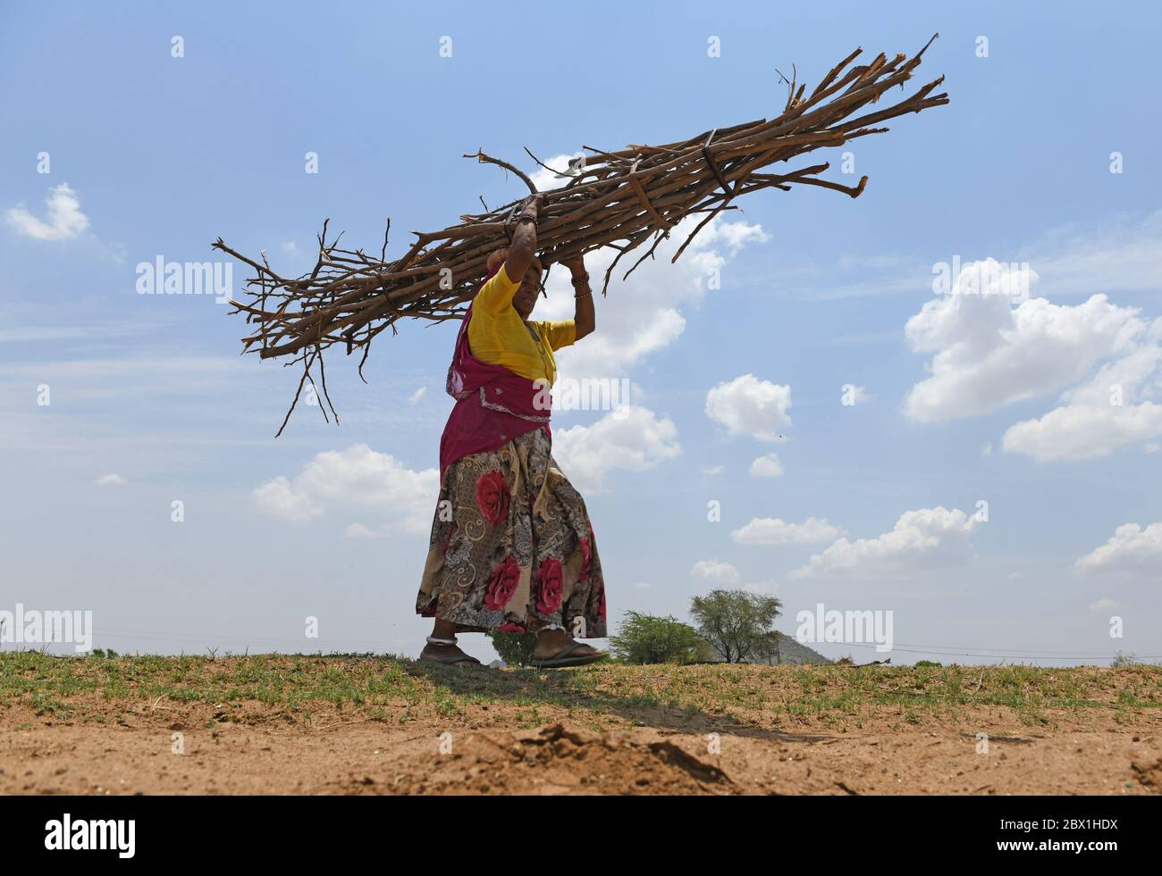 Ajmer Rajasthan India June 4 2020 Rajasthani Woman Carrying Firewood On Her Head On The Eve