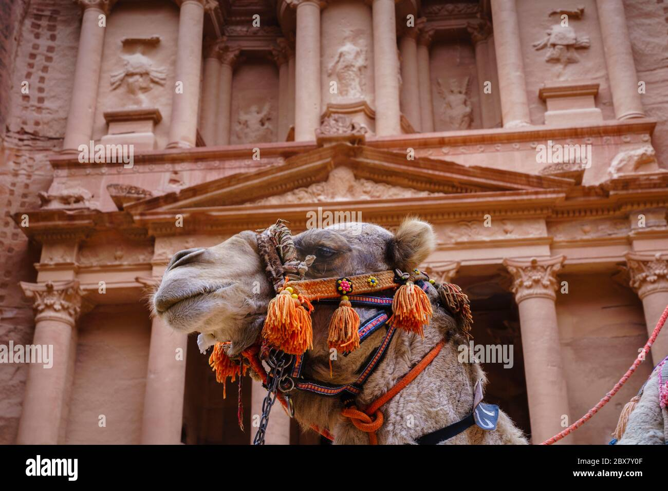 Camel in front of The Treasury in Petra, Jordan Stock Photo