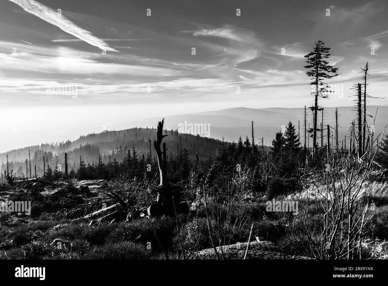 Devasted forest in caues of bark beetle infestation. Sumava National Park and Bavarian Forest, Czech republic and Germany. View from Tristolicnik, Dreisesselberg. Black and white image. Stock Photo